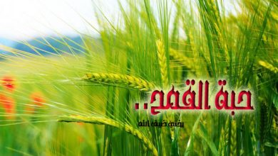 Photo of حبة القمح..