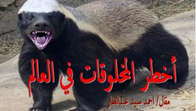 Photo of أخطر المخلوقات في العالم