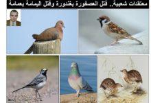 Photo of معتقد قتل العصافير واليمام