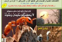 Photo of هل النمل يتكلم ؟